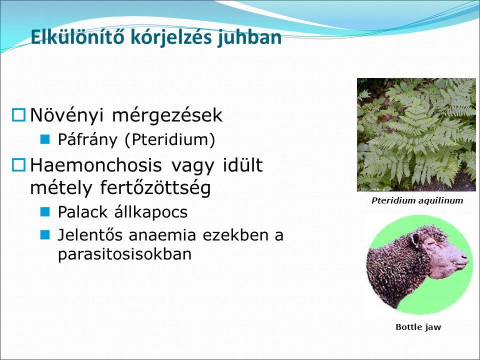 Elkülönítő kórjelzés juhban Bottle jaw  Növényi mérgezések Páfrány (Pteridium)  Haemonchosis vagy idült métely fertőzöttség Palack állkapocs Jelentős anaemia ezekben a parasitosisokban Pteridium aquilinum