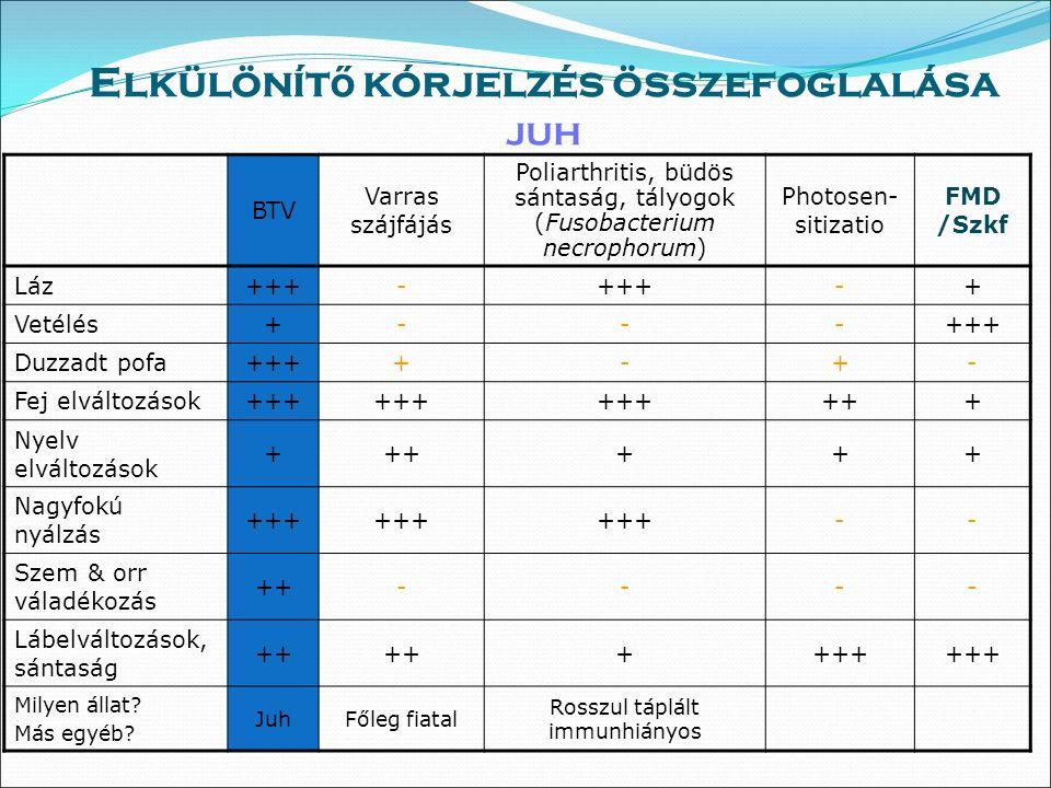 Klinikai tünetek juhban Cyanotikus nyelv: blue tongue - kéknyelv Nyálkahártya hyperaemia