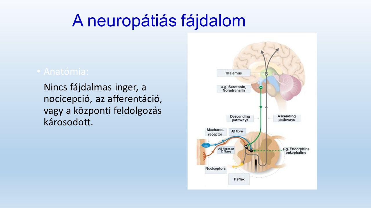 A neuropátiás fájdalom Anatómia: Nincs fájdalmas inger, a nocicepció, az afferentáció, vagy a központi feldolgozás károsodott.