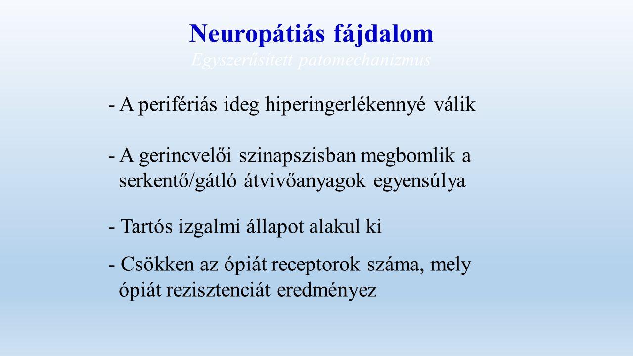 Neuropátiás fájdalom Egyszerűsített patomechanizmus - A perifériás ideg hiperingerlékennyé válik - A gerincvelői szinapszisban megbomlik a serkentő/gátló átvivőanyagok egyensúlya - Tartós izgalmi állapot alakul ki - Csökken az ópiát receptorok száma, mely ópiát rezisztenciát eredményez
