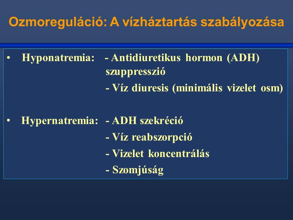 Ozmoreguláció: A vízháztartás szabályozása Hyponatremia: - Antidiuretikus hormon (ADH) szuppresszió - Víz diuresis (minimális vizelet osm) Hypernatremia: - ADH szekréció - Víz reabszorpció - Vizelet koncentrálás - Szomjúság