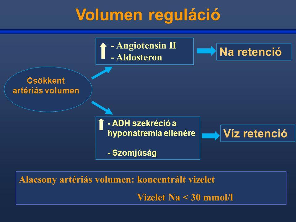 Volumen reguláció - Angiotensin II - Aldosteron Alacsony artériás volumen: koncentrált vizelet Vizelet Na < 30 mmol/l Csökkent artériás volumen - ADH szekréció a hyponatremia ellenére - Szomjúság Na retenció Víz retenció