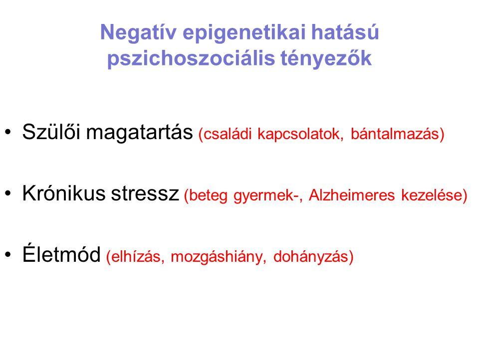 Negatív epigenetikai hatású pszichoszociális tényezők Szülői magatartás (családi kapcsolatok, bántalmazás) Krónikus stressz (beteg gyermek-, Alzheimeres kezelése) Életmód (elhízás, mozgáshiány, dohányzás)