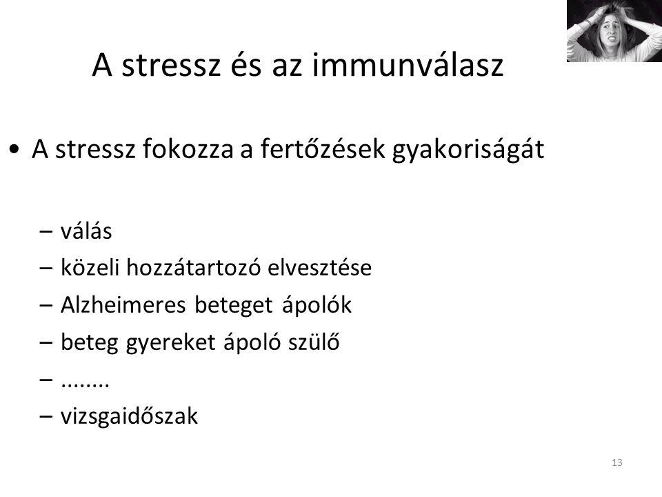 13 A stressz és az immunválasz A stressz fokozza a fertőzések gyakoriságát –válás –közeli hozzátartozó elvesztése –Alzheimeres beteget ápolók –beteg gyereket ápoló szülő –........