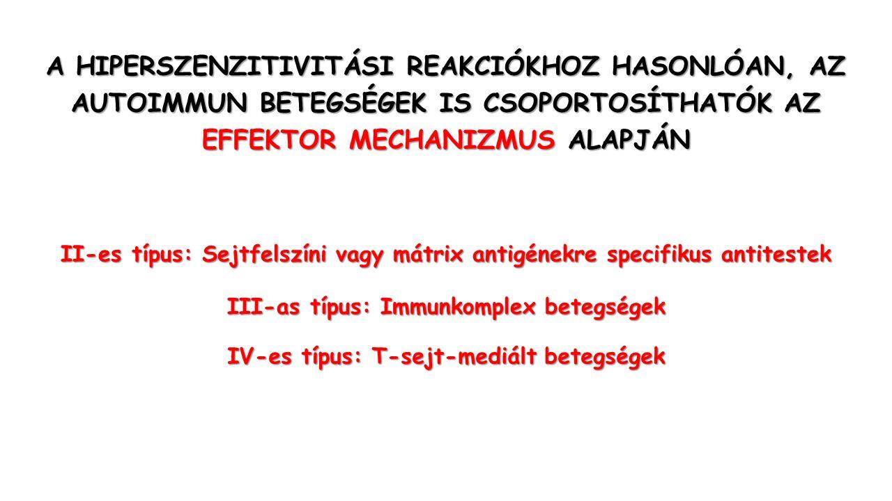 A HIPERSZENZITIVITÁSI REAKCIÓKHOZ HASONLÓAN, AZ AUTOIMMUN BETEGSÉGEK IS CSOPORTOSÍTHATÓK AZ EFFEKTOR MECHANIZMUS ALAPJÁN II-es típus: Sejtfelszíni vagy mátrix antigénekre specifikus antitestek III-as típus: Immunkomplex betegségek IV-es típus: T-sejt-mediált betegségek