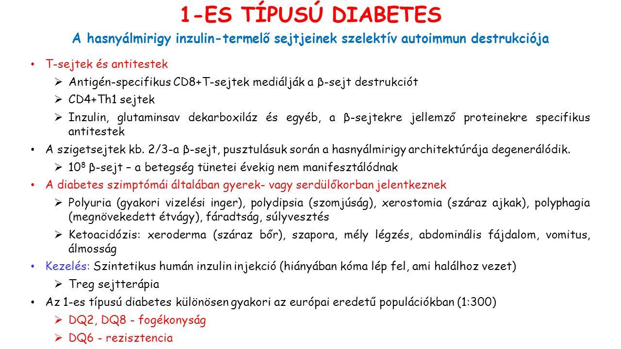 T-sejtek és antitestek  Antigén-specifikus CD8+T-sejtek mediálják a β-sejt destrukciót  CD4+Th1 sejtek  Inzulin, glutaminsav dekarboxiláz és egyéb,