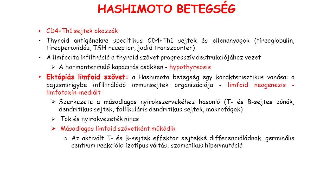CD4+Th1 sejtek okozzák Thyroid antigénekre specifikus CD4+Th1 sejtek és ellenanyagok (tireoglobulin, tireoperoxidáz, TSH receptor, jodid transzporter) A limfocita infiltráció a thyroid szövet progresszív destrukciójához vezet  A hormontermelő kapacitás csökken - hypothyreosis Ektópiás limfoid szövet: a Hashimoto betegség egy karakterisztikus vonása: a pajzsmirigybe infiltrálódó immunsejtek organizációja - limfoid neogenezis - limfotoxin-mediált  Szerkezete a másodlagos nyirokszervekéhez hasonló (T- és B-sejtes zónák, dendritikus sejtek, follikuláris dendritikus sejtek, makrofágok)  Tok és nyirokvezeték nincs  Másodlagos limfoid szövetként működik o Az aktivált T- és B-sejtek effektor sejtekké differenciálódnak, germinális centrum reakciók: izotípus váltás, szomatikus hipermutáció HASHIMOTO BETEGSÉG