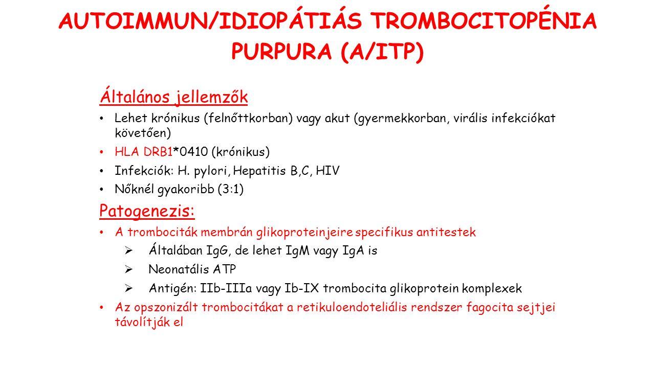 AUTOIMMUN/IDIOPÁTIÁS TROMBOCITOPÉNIA PURPURA (A/ITP) Általános jellemzők Lehet krónikus (felnőttkorban) vagy akut (gyermekkorban, virális infekciókat követően) HLA DRB1*0410 (krónikus) Infekciók: H.