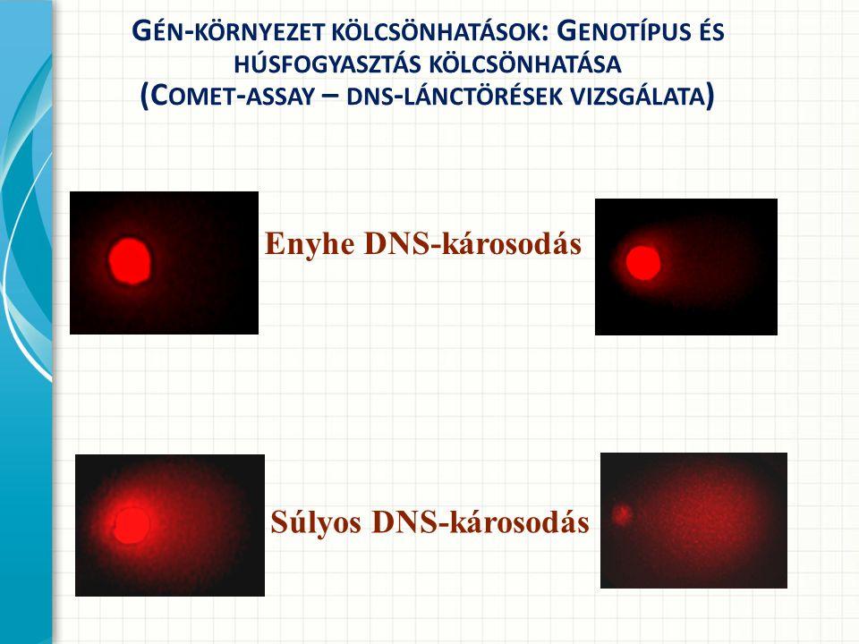 G ÉN - KÖRNYEZET KÖLCSÖNHATÁSOK : G ENOTÍPUS ÉS HÚSFOGYASZTÁS KÖLCSÖNHATÁSA (C OMET - ASSAY – DNS - LÁNCTÖRÉSEK VIZSGÁLATA ) Súlyos DNS-károsodás Enyhe DNS-károsodás