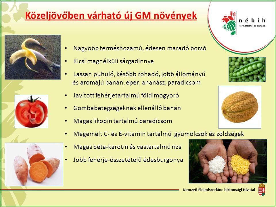 Közeljövőben várható új GM növények Nagyobb terméshozamú, édesen maradó borsó Kicsi magnélküli sárgadinnye Lassan puhuló, később rohadó, jobb állomány