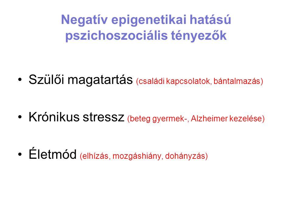 Negatív epigenetikai hatású pszichoszociális tényezők Szülői magatartás (családi kapcsolatok, bántalmazás) Krónikus stressz (beteg gyermek-, Alzheimer kezelése) Életmód (elhízás, mozgáshiány, dohányzás)