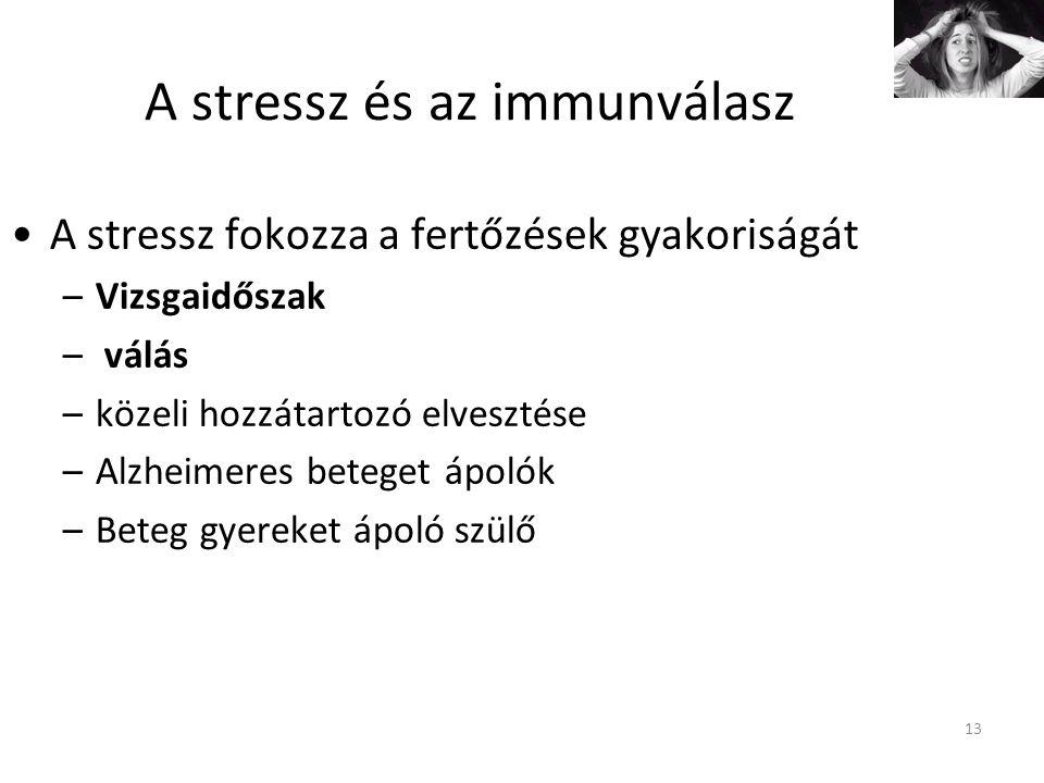 13 A stressz és az immunválasz A stressz fokozza a fertőzések gyakoriságát –Vizsgaidőszak – válás –közeli hozzátartozó elvesztése –Alzheimeres beteget ápolók –Beteg gyereket ápoló szülő
