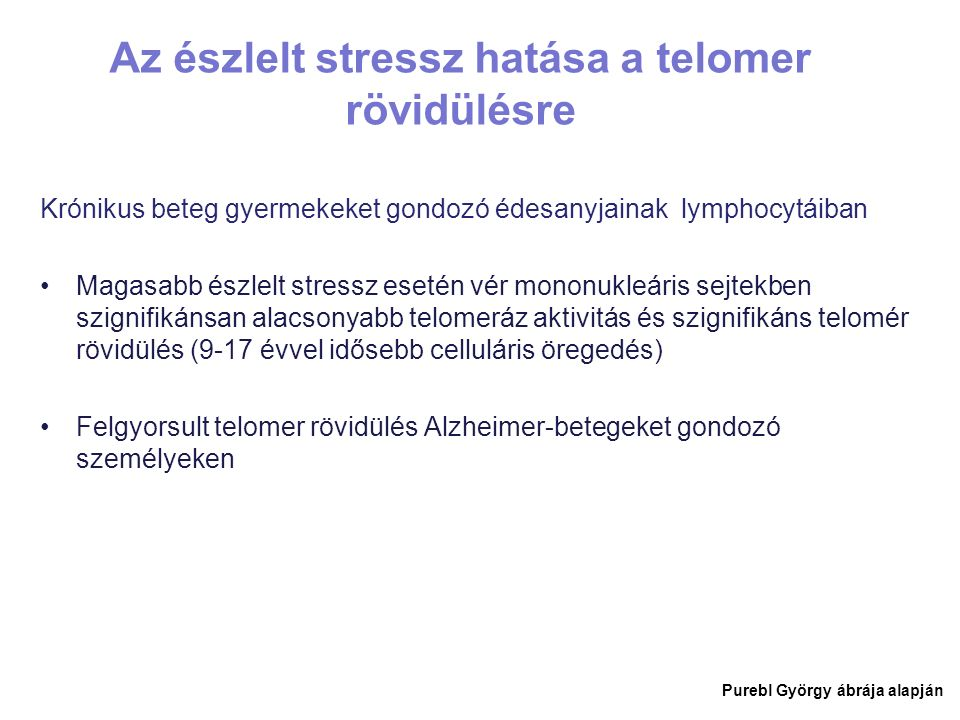Az észlelt stressz hatása a telomer rövidülésre Krónikus beteg gyermekeket gondozó édesanyjainak lymphocytáiban Magasabb észlelt stressz esetén vér mononukleáris sejtekben szignifikánsan alacsonyabb telomeráz aktivitás és szignifikáns telomér rövidülés (9-17 évvel idősebb celluláris öregedés) Felgyorsult telomer rövidülés Alzheimer-betegeket gondozó személyeken Purebl György ábrája alapján