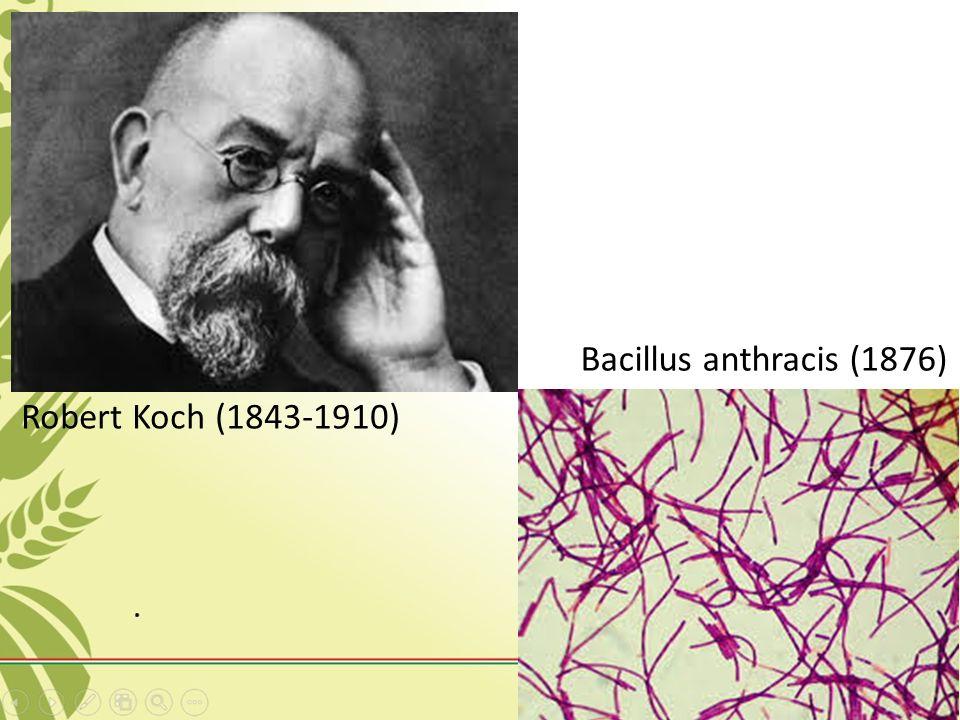Robert Koch (1843-1910) Bacillus anthracis (1876)