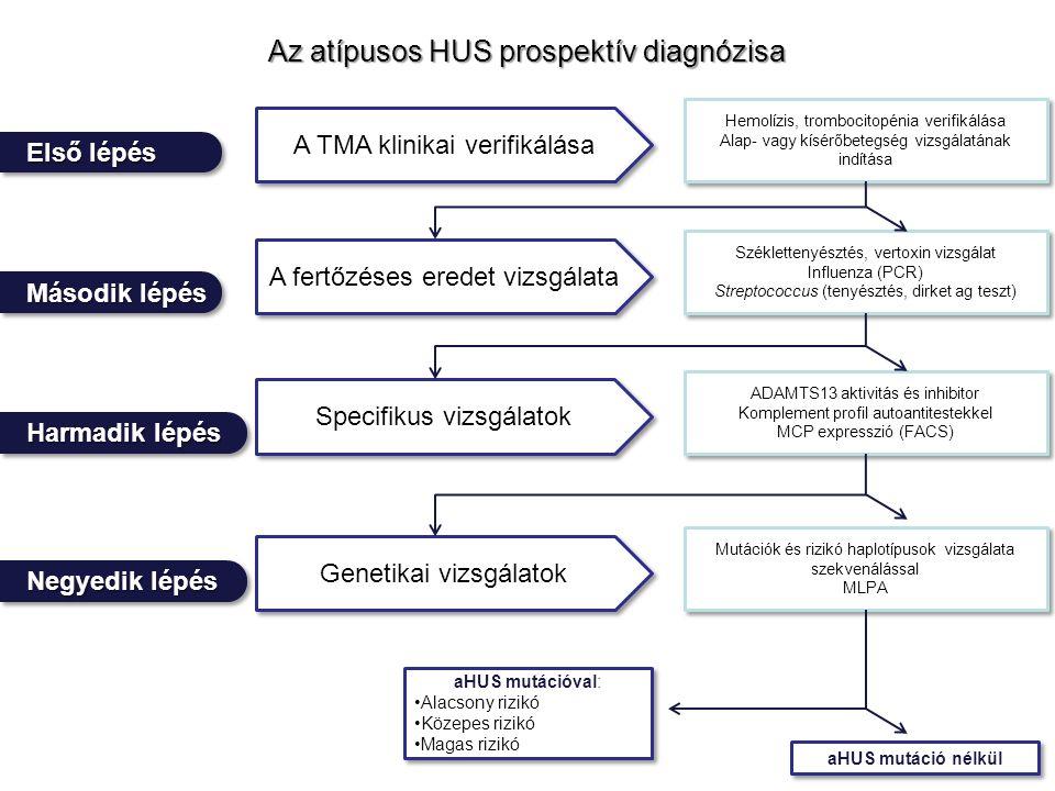 Az atípusos HUS prospektív diagnózisa Negyedik lépés Első lépés Harmadik lépés Második lépés A TMA klinikai verifikálása A fertőzéses eredet vizsgálata Specifikus vizsgálatok Genetikai vizsgálatok Hemolízis, trombocitopénia verifikálása Alap- vagy kísérőbetegség vizsgálatának indítása Hemolízis, trombocitopénia verifikálása Alap- vagy kísérőbetegség vizsgálatának indítása Széklettenyésztés, vertoxin vizsgálat Influenza (PCR) Streptococcus (tenyésztés, dirket ag teszt) Széklettenyésztés, vertoxin vizsgálat Influenza (PCR) Streptococcus (tenyésztés, dirket ag teszt) ADAMTS13 aktivitás és inhibitor Komplement profil autoantitestekkel MCP expresszió (FACS) ADAMTS13 aktivitás és inhibitor Komplement profil autoantitestekkel MCP expresszió (FACS) Mutációk és rizikó haplotípusok vizsgálata szekvenálással MLPA Mutációk és rizikó haplotípusok vizsgálata szekvenálással MLPA aHUS mutációval: Alacsony rizikó Közepes rizikó Magas rizikó aHUS mutációval: Alacsony rizikó Közepes rizikó Magas rizikó aHUS mutáció nélkül