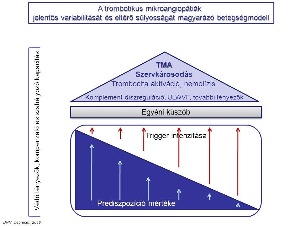 Az atípusos HUS prospektív diagnózisa Negyedik lépés Első lépés Harmadik lépés Második lépés A TMA klinikai verifikálása A fertőzéses eredet vizsgálata Specifikus vizsgálatok Hemolízis, trombocitopénia verifikálása Alap- vagy kísérőbetegség vizsgálatának indítása Hemolízis, trombocitopénia verifikálása Alap- vagy kísérőbetegség vizsgálatának indítása Széklettenyésztés, vertoxin vizsgálat Influenza (PCR) Streptococcus (tenyésztés, dirket ag teszt) Széklettenyésztés, vertoxin vizsgálat Influenza (PCR) Streptococcus (tenyésztés, dirket ag teszt) ADAMTS13 aktivitás és inhibitor Komplement profil autoantitestekkel MCP expresszió (FACS) ADAMTS13 aktivitás és inhibitor Komplement profil autoantitestekkel MCP expresszió (FACS) TTP Autoimmun aHUS MCP-kapcsolt aHUS TTP Autoimmun aHUS MCP-kapcsolt aHUS