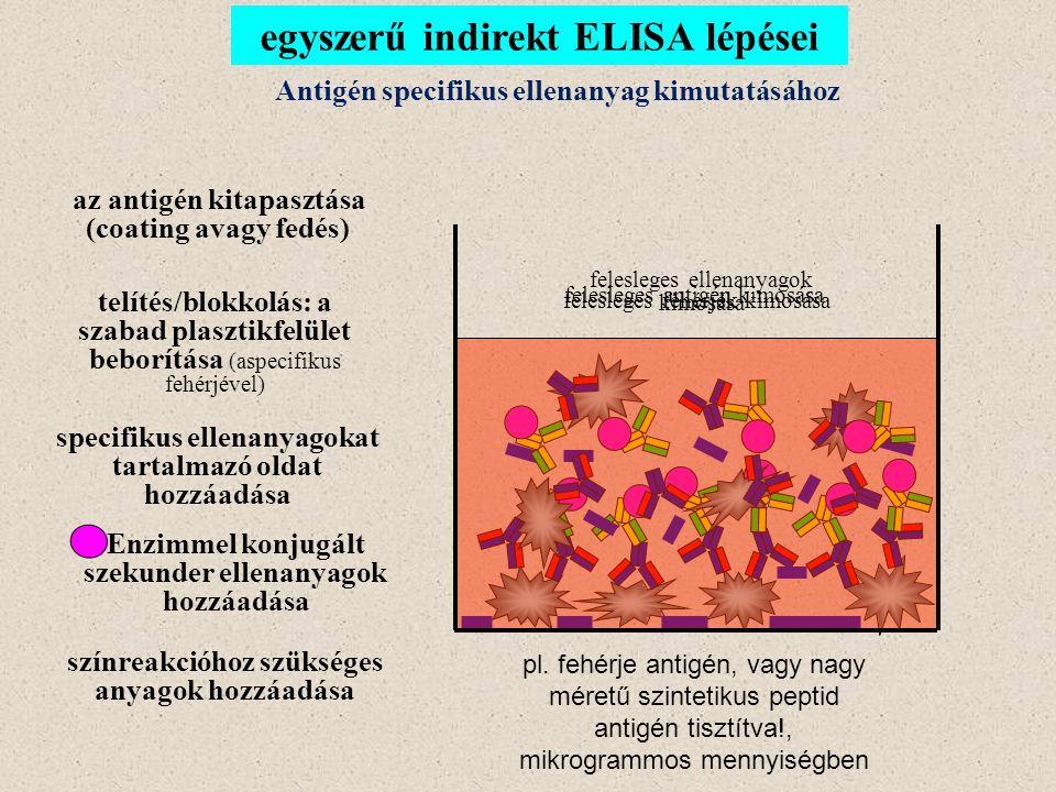 egyszerű indirekt ELISA lépései Antigén specifikus ellenanyag kimutatásához az antigén kitapasztása (coating avagy fedés) felesleges antigén kimosása telítés/blokkolás: a szabad plasztikfelület beborítása (aspecifikus fehérjével) felesleges fehérjék kimosása specifikus ellenanyagokat tartalmazó oldat hozzáadása Enzimmel konjugált szekunder ellenanyagok hozzáadása felesleges ellenanyagok kimosása színreakcióhoz szükséges anyagok hozzáadása pl.