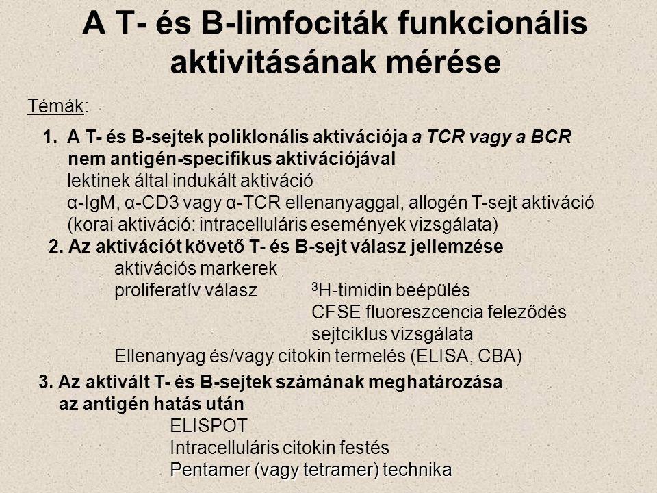 A T- és B-limfociták funkcionális aktivitásának mérése 1.A T- és B-sejtek poliklonális aktivációja a TCR vagy a BCR nem antigén-specifikus aktivációjával lektinek által indukált aktiváció α-IgM, α-CD3 vagy α-TCR ellenanyaggal, allogén T-sejt aktiváció (korai aktiváció: intracelluláris események vizsgálata) 2.