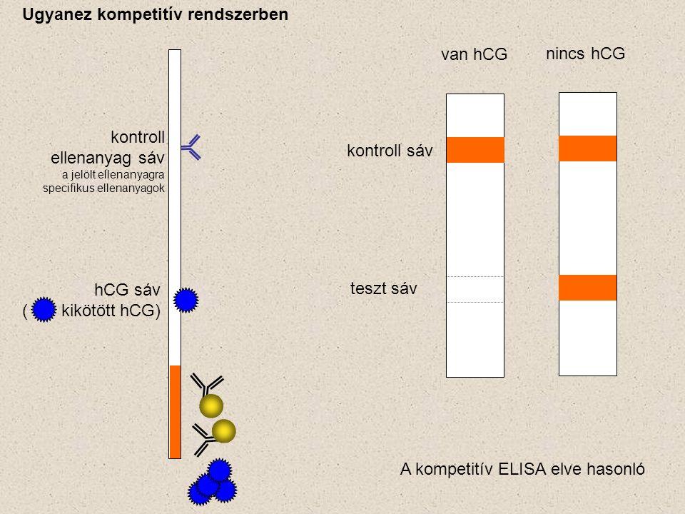 hCG sáv ( kikötött hCG) kontroll ellenanyag sáv a jelölt ellenanyagra specifikus ellenanyagok kontroll sáv teszt sáv van hCG nincs hCG Ugyanez kompetitív rendszerben A kompetitív ELISA elve hasonló