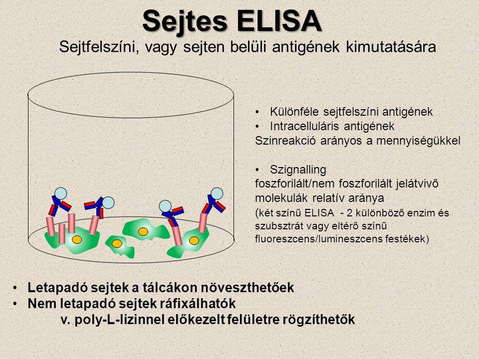 Sejtes ELISA Sejtfelszíni, vagy sejten belüli antigének kimutatására Letapadó sejtek a tálcákon növeszthetőek Nem letapadó sejtek ráfixálhatók v. poly