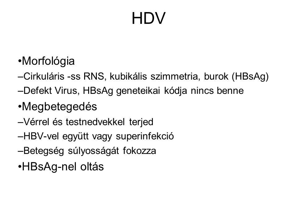 HDV Morfológia – Cirkuláris -ss RNS, kubikális szimmetria, burok (HBsAg) – Defekt Virus, HBsAg geneteikai kódja nincs benne Megbetegedés – Vérrel és testnedvekkel terjed – HBV-vel együtt vagy superinfekció – Betegség súlyosságát fokozza HBsAg-nel oltás