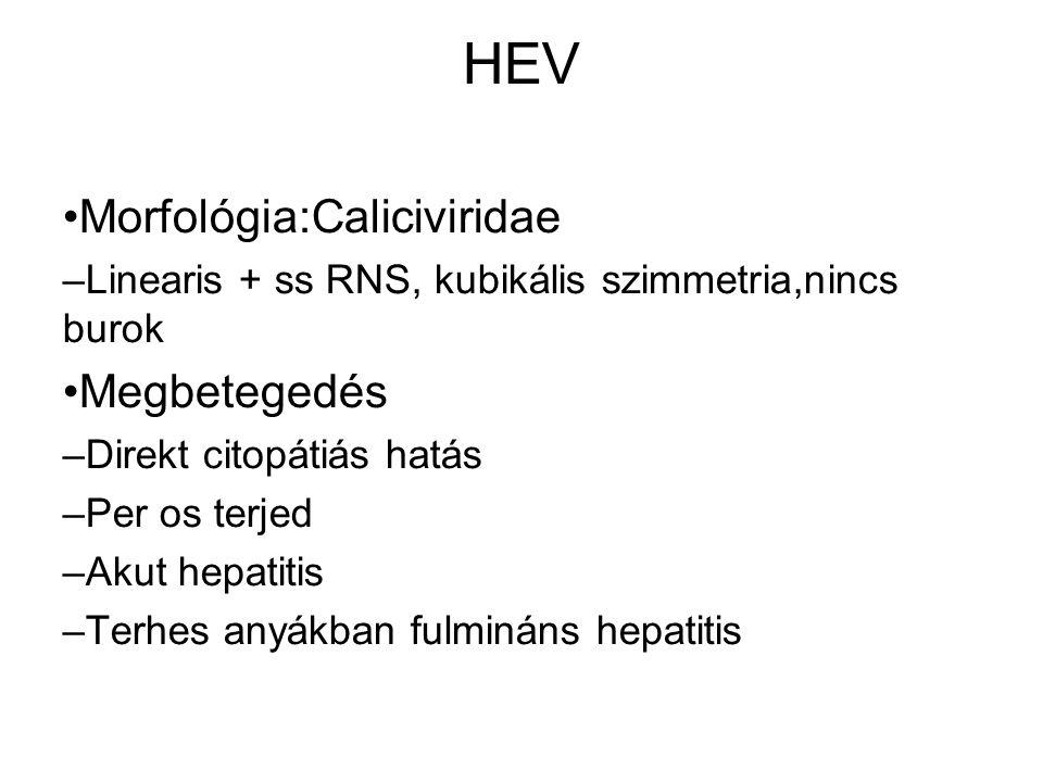 HEV Morfológia:Caliciviridae – Linearis + ss RNS, kubikális szimmetria,nincs burok Megbetegedés – Direkt citopátiás hatás – Per os terjed – Akut hepatitis – Terhes anyákban fulmináns hepatitis