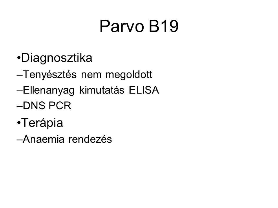 Parvo B19 Diagnosztika – Tenyésztés nem megoldott – Ellenanyag kimutatás ELISA – DNS PCR Terápia – Anaemia rendezés