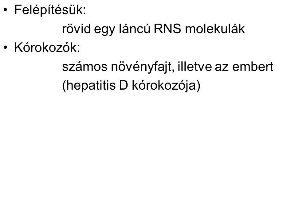 Felépítésük: rövid egy láncú RNS molekulák Kórokozók: számos növényfajt, illetve az embert (hepatitis D kórokozója)
