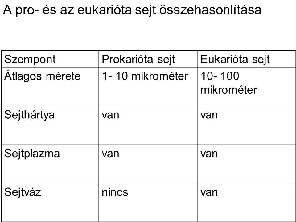 A pro- és az eukarióta sejt összehasonlítása SzempontProkarióta sejtEukarióta sejt Átlagos mérete1- 10 mikrométer10- 100 mikrométer Sejthártyavan Sejtplazmavan Sejtváznincsvan