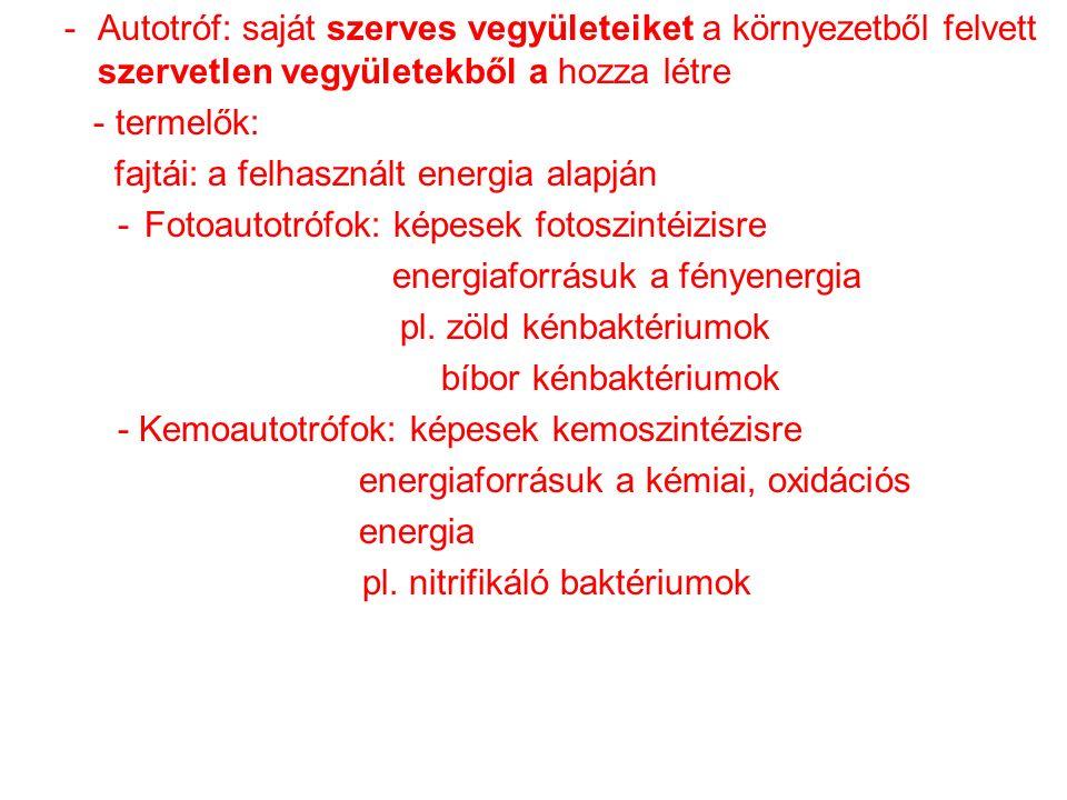 -Autotróf: saját szerves vegyületeiket a környezetből felvett szervetlen vegyületekből a hozza létre - termelők: fajtái: a felhasznált energia alapján -Fotoautotrófok: képesek fotoszintéizisre energiaforrásuk a fényenergia pl.