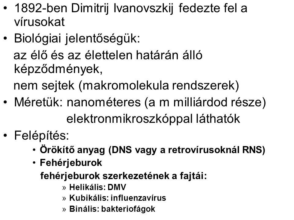 1892-ben Dimitrij Ivanovszkij fedezte fel a vírusokat Biológiai jelentőségük: az élő és az élettelen határán álló képződmények, nem sejtek (makromolekula rendszerek) Méretük: nanométeres (a m milliárdod része) elektronmikroszkóppal láthatók Felépítés: Örökítő anyag (DNS vagy a retrovírusoknál RNS) Fehérjeburok fehérjeburok szerkezetének a fajtái: »Helikális: DMV »Kubikális: influenzavírus »Binális: bakteriofágok