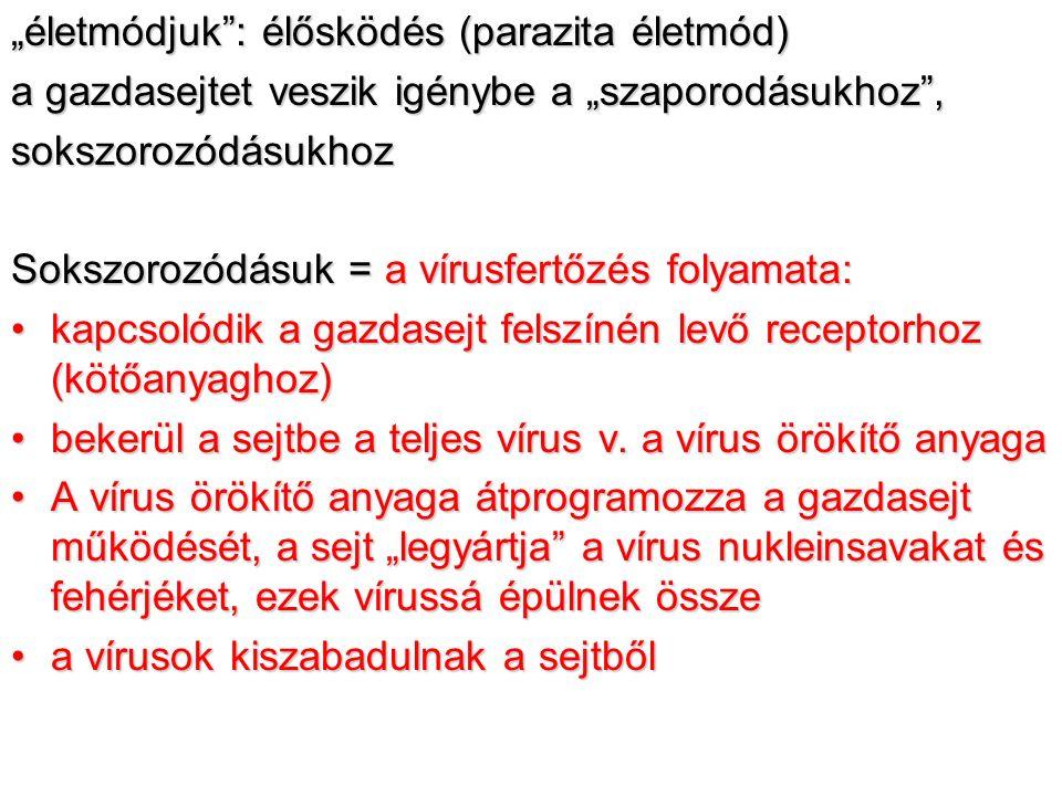 """""""életmódjuk : élősködés (parazita életmód) a gazdasejtet veszik igénybe a """"szaporodásukhoz , sokszorozódásukhoz Sokszorozódásuk = a vírusfertőzés folyamata: kapcsolódik a gazdasejt felszínén levő receptorhoz (kötőanyaghoz)kapcsolódik a gazdasejt felszínén levő receptorhoz (kötőanyaghoz) bekerül a sejtbe a teljes vírus v."""
