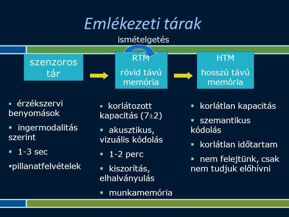 Emlékezeti tárak szenzoros tár RTM rövid távú memória HTM hosszú távú memória  érzékszervi benyomások  ingermodalitás szerint  1-3 sec  pillanatfelvételek  korlátozott kapacitás (7±2)  akusztikus, vizuális kódolás  1-2 perc  kiszorítás, elhalványulás  munkamemória  korlátlan kapacitás  szemantikus kódolás  korlátlan időtartam  nem felejtünk, csak nem tudjuk előhívni ismételgetés