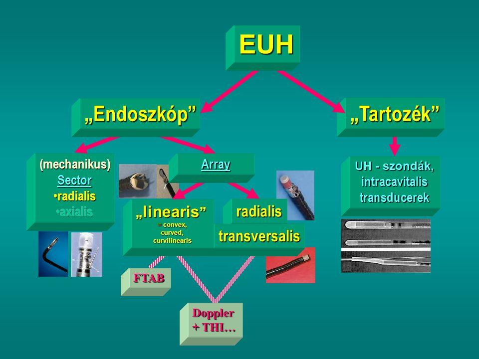 "UH - szondák, intracavitalistransducerek ""Tartozék ""Endoszkóp Array FTAB radialis transversalis Doppler + THI… "" linearis = convex, curved, curvilinearis EUH"