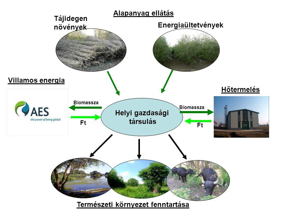 Energiaültetvények Tájidegen növények Helyi gazdasági társulás Ft Természeti környezet fenntartása Biomassza Alapanyag ellátás Hőtermelés Biomassza Ft