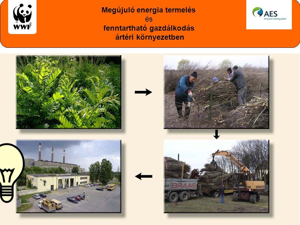 Megújuló energia termelés és fenntartható gazdálkodás ártéri környezetben