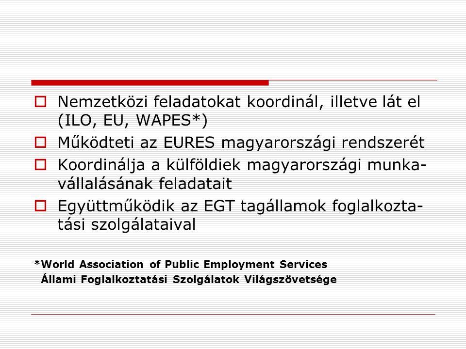  Nemzetközi feladatokat koordinál, illetve lát el (ILO, EU, WAPES*)  Működteti az EURES magyarországi rendszerét  Koordinálja a külföldiek magyarországi munka- vállalásának feladatait  Együttműködik az EGT tagállamok foglalkozta- tási szolgálataival *World Association of Public Employment Services Állami Foglalkoztatási Szolgálatok Világszövetsége