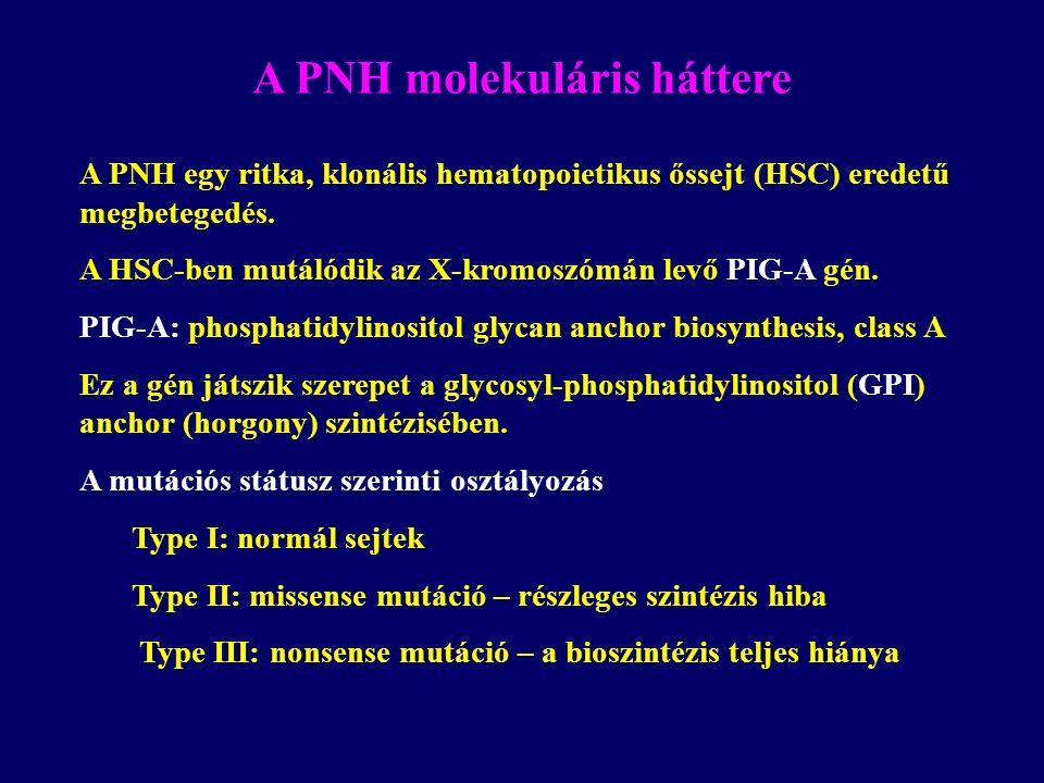 A PNH molekuláris háttere A PNH egy ritka, klonális hematopoietikus őssejt (HSC) eredetű megbetegedés. A HSC-ben mutálódik az X-kromoszómán levő PIG-A