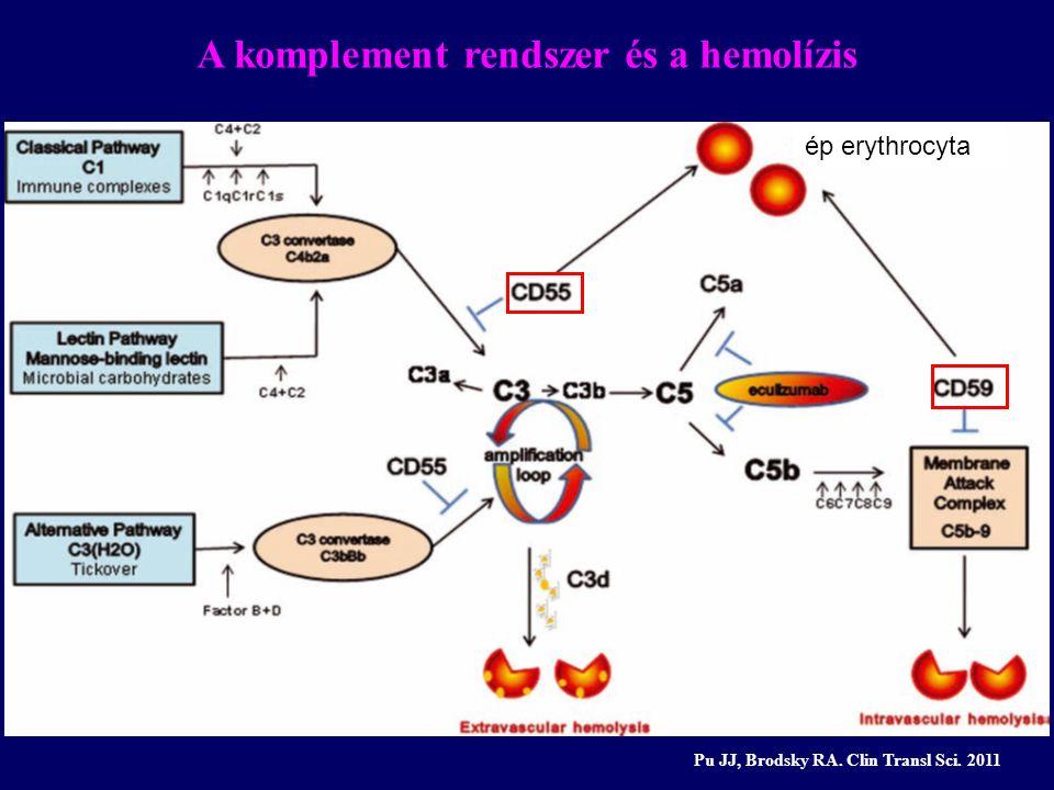 A komplement rendszer és a hemolízis Pu JJ, Brodsky RA. Clin Transl Sci. 2011 ép erythrocyta
