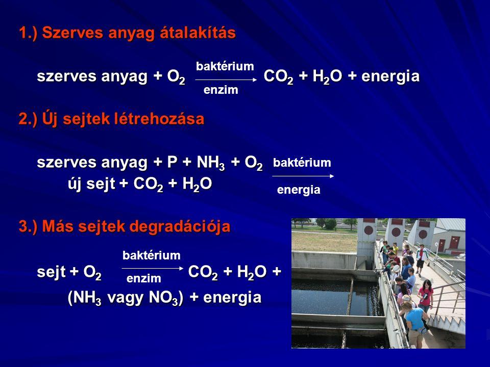1.) Szerves anyag átalakítás szerves anyag + O 2 CO 2 + H 2 O + energia 2.) Új sejtek létrehozása szerves anyag + P + NH 3 + O 2 új sejt + CO 2 + H 2