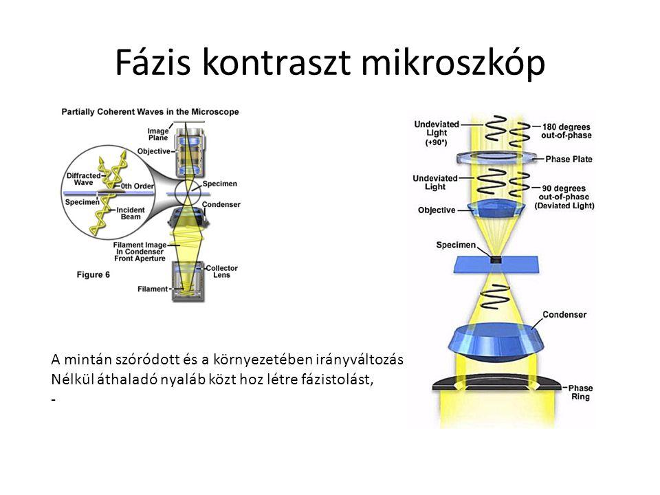 Fázis kontraszt mikroszkóp A mintán szóródott és a környezetében irányváltozás Nélkül áthaladó nyaláb közt hoz létre fázistolást, -