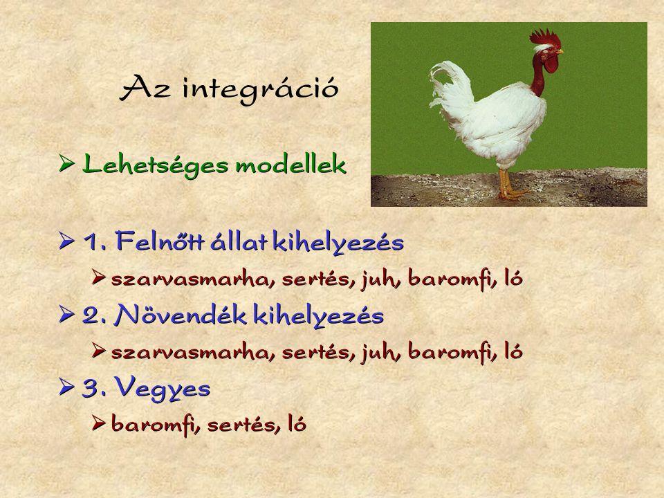 Az integráció  Lehetséges modellek  1.