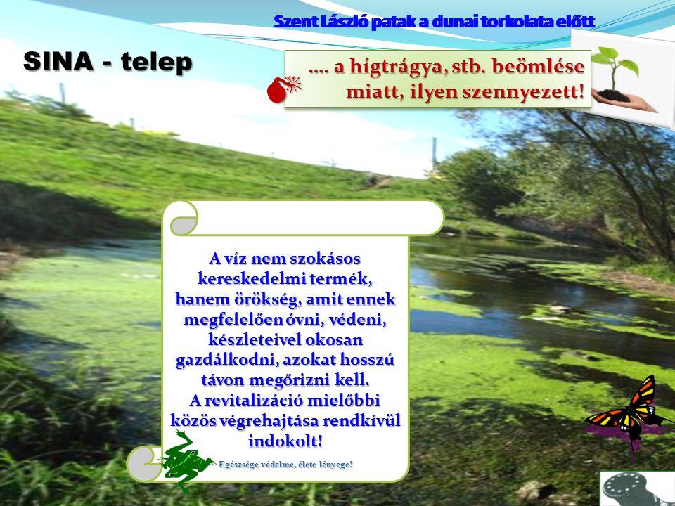 Szent László patak a dunai torkolata előtt SINA - telep Szent László patak a dunai torkolata előtt …. a hígtrágya, stb. beömlése miatt, ilyen szennyez