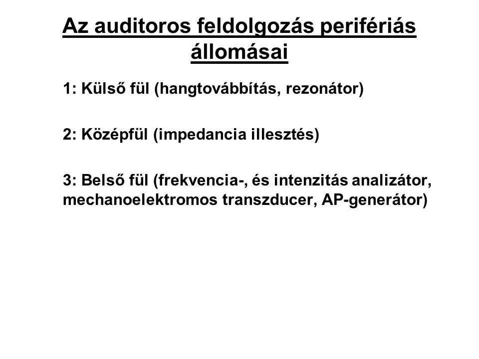 Az auditoros feldolgozás perifériás állomásai 1: Külső fül (hangtovábbítás, rezonátor) 2: Középfül (impedancia illesztés) 3: Belső fül (frekvencia-, és intenzitás analizátor, mechanoelektromos transzducer, AP-generátor)