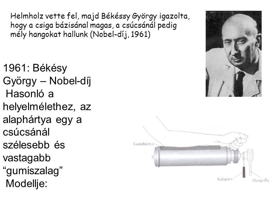 1961: Békésy György – Nobel-díj Hasonló a helyelmélethez, az alaphártya egy a csúcsánál szélesebb és vastagabb gumiszalag Modellje: Helmholz vette fel, majd Békéssy György igazolta, hogy a csiga bázisánal magas, a csúcsánál pedig mély hangokat hallunk (Nobel-díj, 1961)