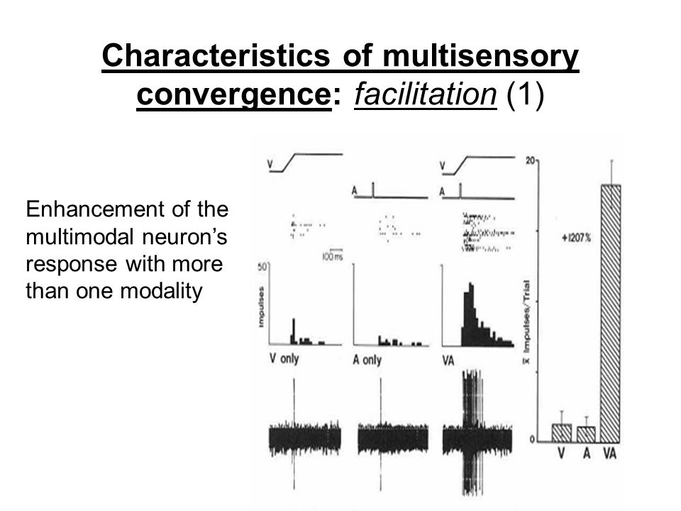 Characteristics of multisensory convergence: facilitation (1) Enhancement of the multimodal neuron's response with more than one modality