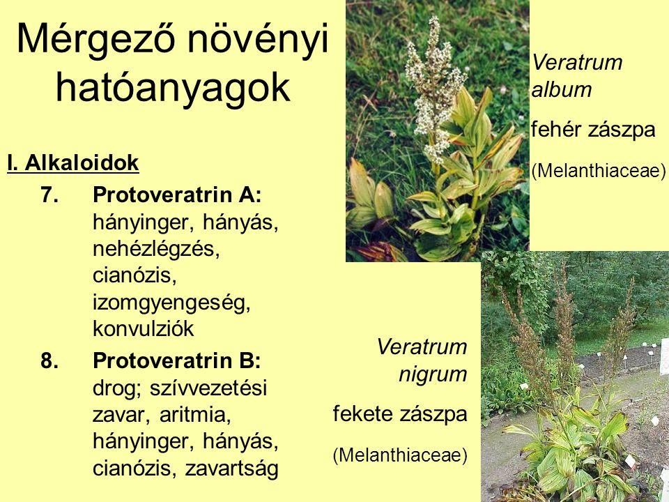 Mérgező növényi hatóanyagok I. Alkaloidok 7.Protoveratrin A: hányinger, hányás, nehézlégzés, cianózis, izomgyengeség, konvulziók 8.Protoveratrin B: dr