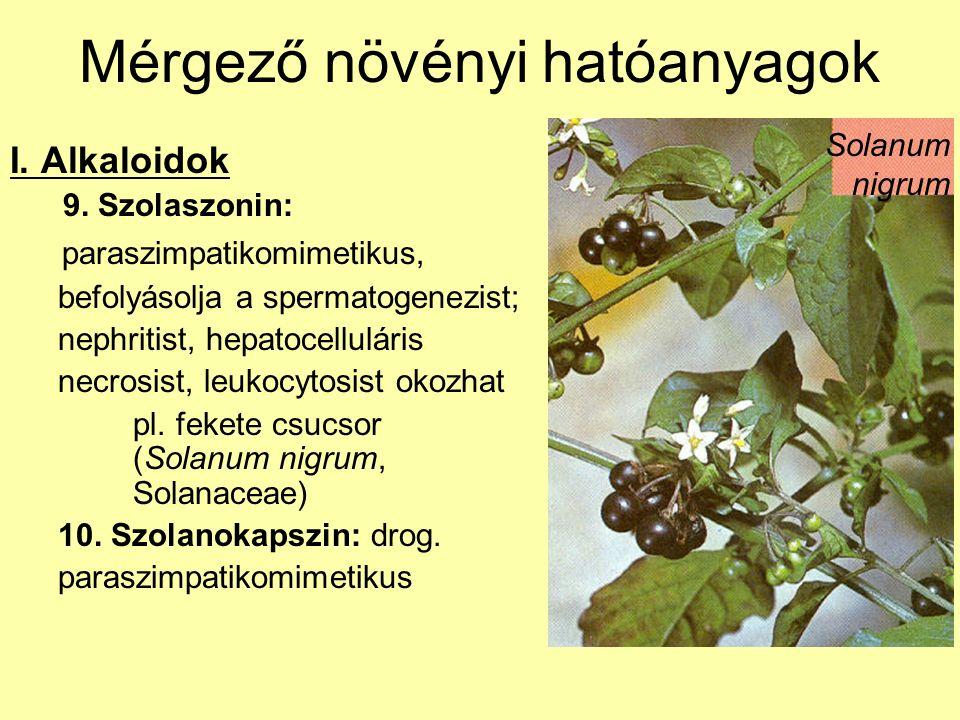 Mérgező növényi hatóanyagok I. Alkaloidok 9. Szolaszonin: paraszimpatikomimetikus, befolyásolja a spermatogenezist; nephritist, hepatocelluláris necro