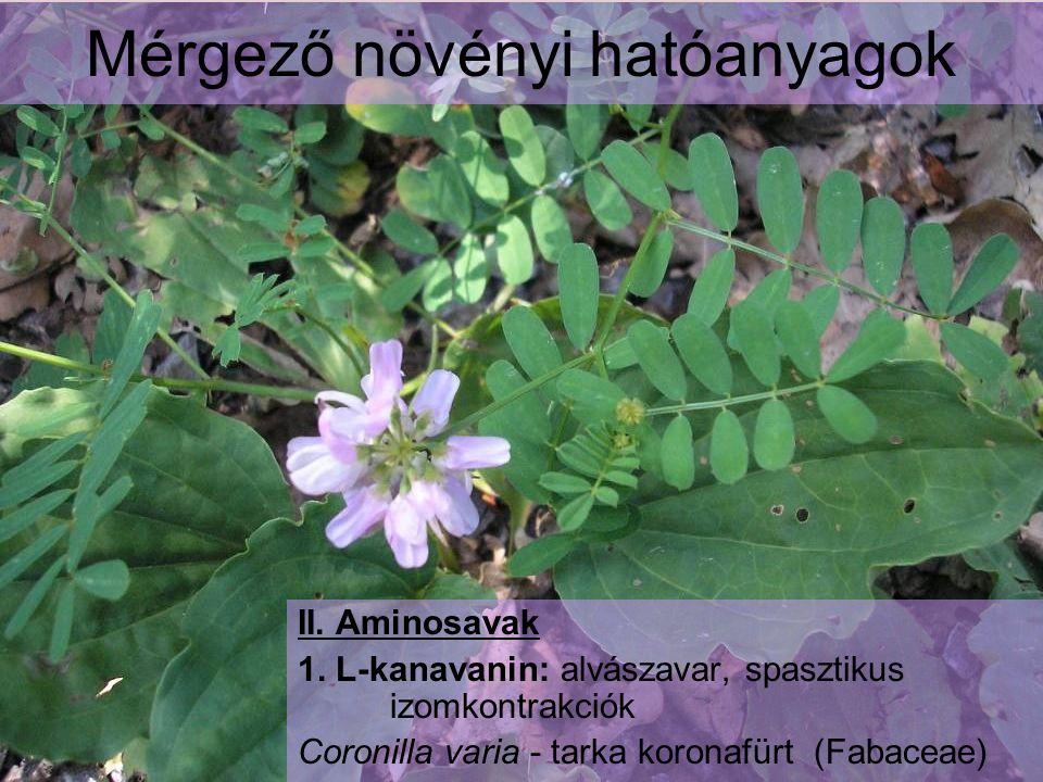 Mérgező növényi hatóanyagok II. Aminosavak 1. L-kanavanin: alvászavar, spasztikus izomkontrakciók Coronilla varia - tarka koronafürt (Fabaceae)