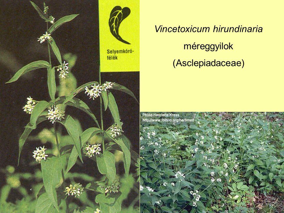 Vincetoxicum hirundinaria méreggyilok (Asclepiadaceae)